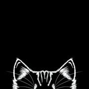Stellenangebote, Stellen bei Black Cat Agency