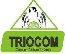 Stellenangebote, Stellen bei Triocom SRL