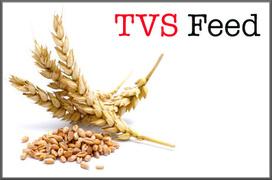 Locuri de munca la TVS FEED