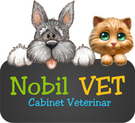 Job offers, jobs at NOBIL VET